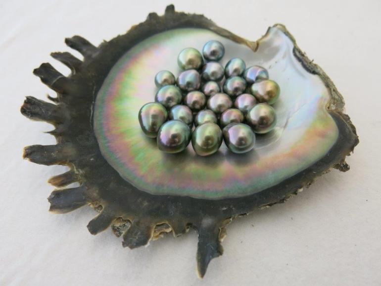 Perles culture
